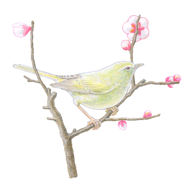 暮らしを楽しむ二十四節気手帖2月カレンダー「鶯」